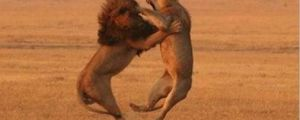 20 Perfectly Timed Photos of Animals Fighting
