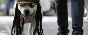 In the Photograph: Dressed up Dogs From Around the World