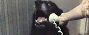 The Phone Dog: Hilarious Meme Remixes (9 Pics)