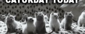 TGIC: Finally After All The Waiting It's Caturday Today (15 Cat Gifs)