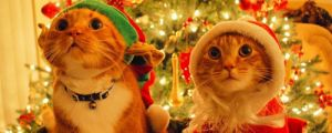 55 Pictures of Funny Animals Cutely Enjoying Christmas
