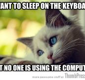 Sad Cat Is Sad: 25 Hilarious First World Problems Cat Meme