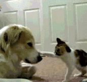 Dog & Cat GIFs Insanity: 10 Hilarious Cat'n'Dog GIFs to make you LOL