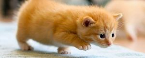 Awwwness Overloaded: Cute and Cuddly Animals to Melt Your Heart (40 Pics)