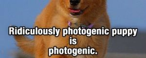 The Awesome & Adorable Adventures of Ridiculously Photogenic Puppy (10 Pics)