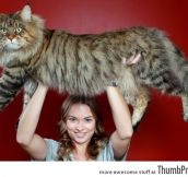 Meet Rupert the giant cat