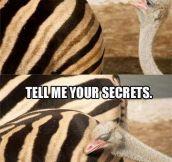 Oh glorious zebra butt