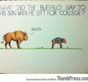 What did the buffalo say to his son?