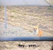 Hey…psst