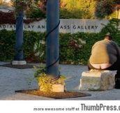 Ass Gallery