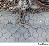 Mother nature at its finest