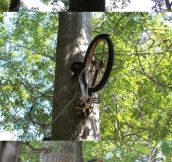 My father left his bike against this tree 40 years ago.