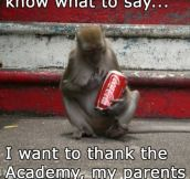 Award winning monkey