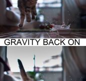 Gravity kitty