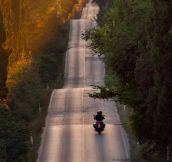 Riding on this road in Bolgheri (Italy) must be fun!