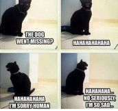The dog?