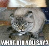 Who's eating Grumpy Cat's food?!