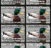 Best of Actual Advice Mallard