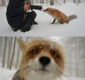 OH WELL HELLO MR. FOX!