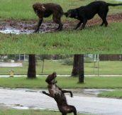 WTF Dog?