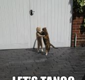 It's tango time…