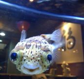 One really happy fish
