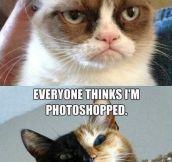 CAT PROBLEMS.