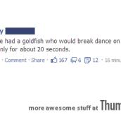 I HAD A GOLDFISH ONCE…