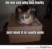 Send barking box to south pole