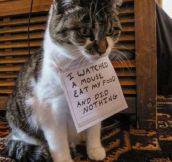 Shame cat
