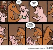 So a horse walks into a bar
