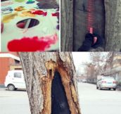 Talent girl turns tree holes into lovely views with her paintbrush