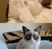 Grumpy cat strikes again