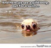 A wild derp…