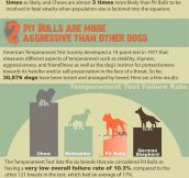 COMMON MYTHS ABOUT THE PIT BULL.