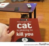 How to tell if your cat is ploting to kill you