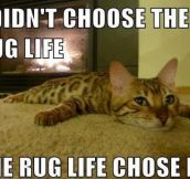 I didn't choose the rug life!