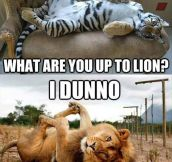 So, what are you upto lion?