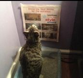 Something to read for the cat