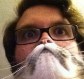 "Hilarious Pet Owners Take Photos with ""Cat Beards"" (10 Pics)"