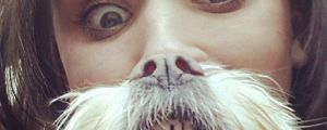 "Forget Cat Beards, ""Dog Bearding"" is The Latest Internet Trend (18 Pics)"