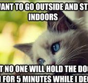 "The Best Of ""First-World Cat Problems"" (20 Pics)"