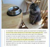 Meet The Cutest Cat Ever