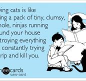 What owning a cat feels like