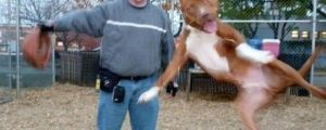 The Funniest Animal Photobombs Of All Time (28 Pics)