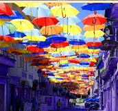 Magical photos of umbrellas dotting the sky in Portugal…
