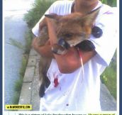 The kid who saved a fox…