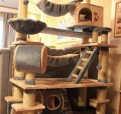 Epic cat tree…
