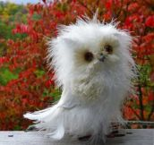 And now you know Disheveled Owls exist and they're awesome…