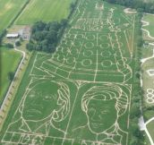Splendid maze…